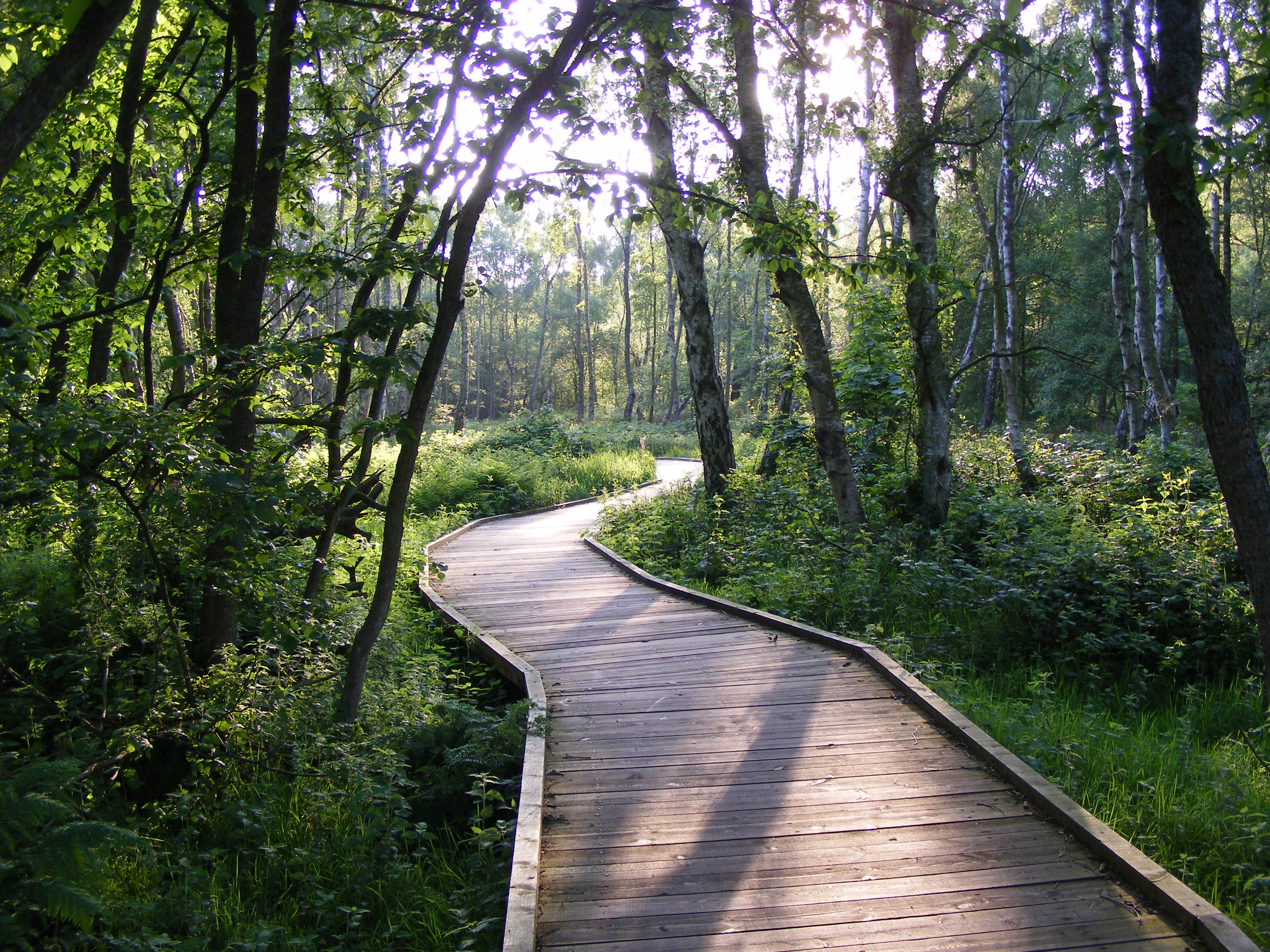 Boardwalk beside Windy Gap 2